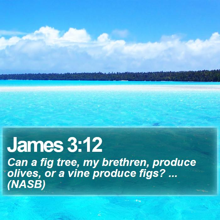 James 3:12 - Can a fig tree, my brethren, produce olives, or a vine produce figs? ... (NASB)