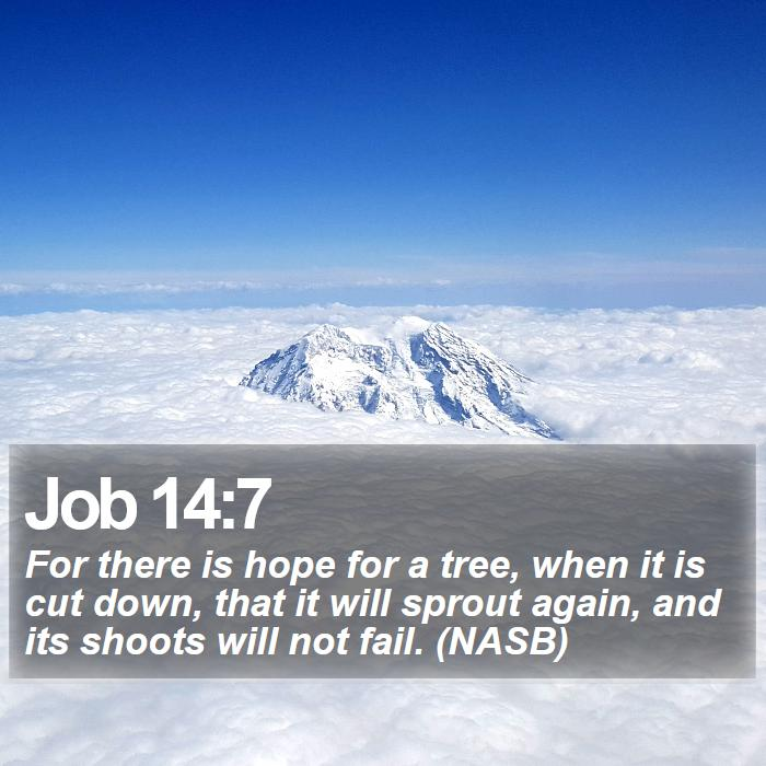 Job 14:7 - For there is hope for a tree, when it is cut down, that it will sprout again, and its shoots will not fail. (NASB)