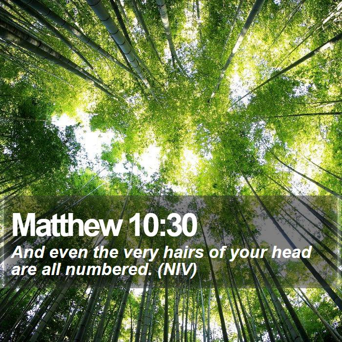 Matthew 10:30 - And even the very hairs of your head are all numbered. (NIV)