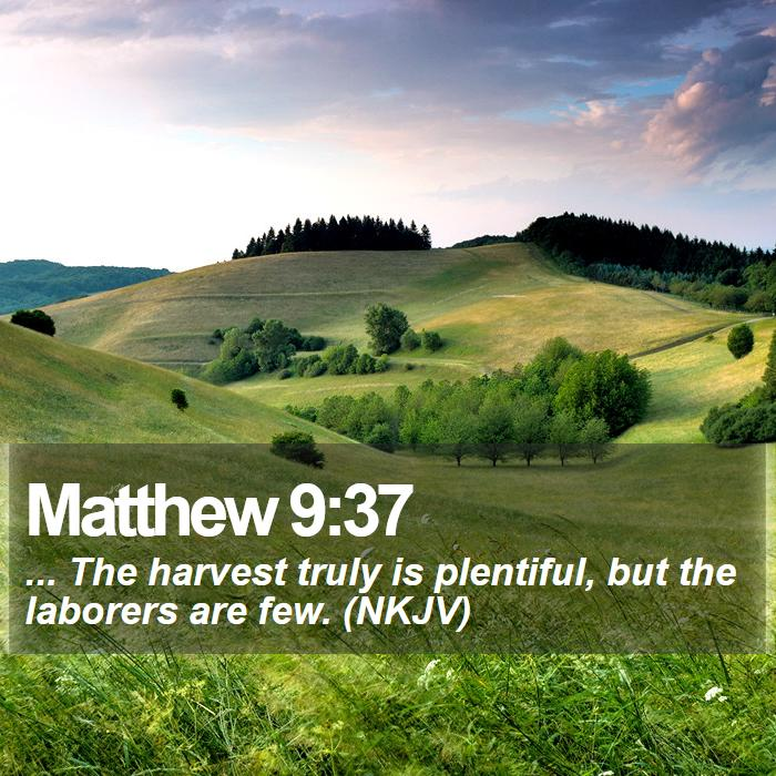Matthew 9:37 - ... The harvest truly is plentiful, but the laborers are few. (NKJV)
