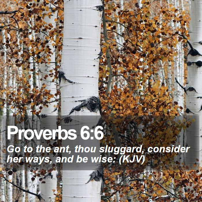 Proverbs 6:6 - Go to the ant, thou sluggard, consider her ways, and be wise: (KJV)